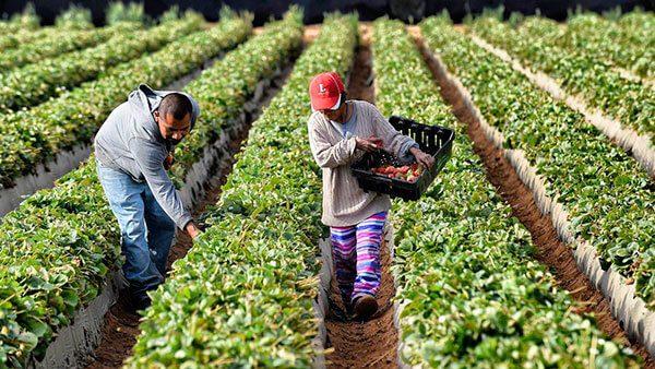 De la cuna a la universidad: organización hispana ayuda a hijos de trabajadores del campo