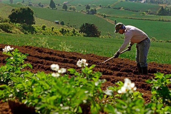 Implementan-programa-de-empleo-temporal-para-migrantes-en-Sonora