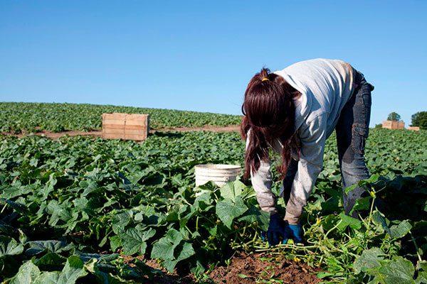Granjeros-de-EEUU-quieren-legalizar-a-sus-trabajadores-indocumentados