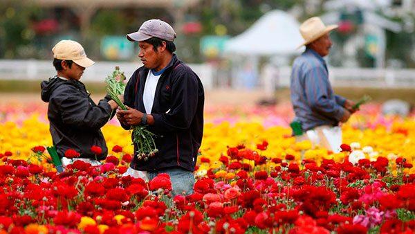 Varios estados lideran la contratación de trabajadores inmigrantes temporales
