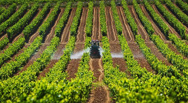 Si eres un trabajador agrícola temporal, esta información es de utilidad para ti