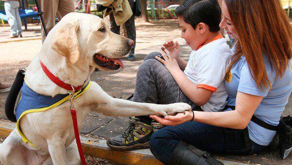 Tener mascotas ayuda a reducir la hipertension arterial
